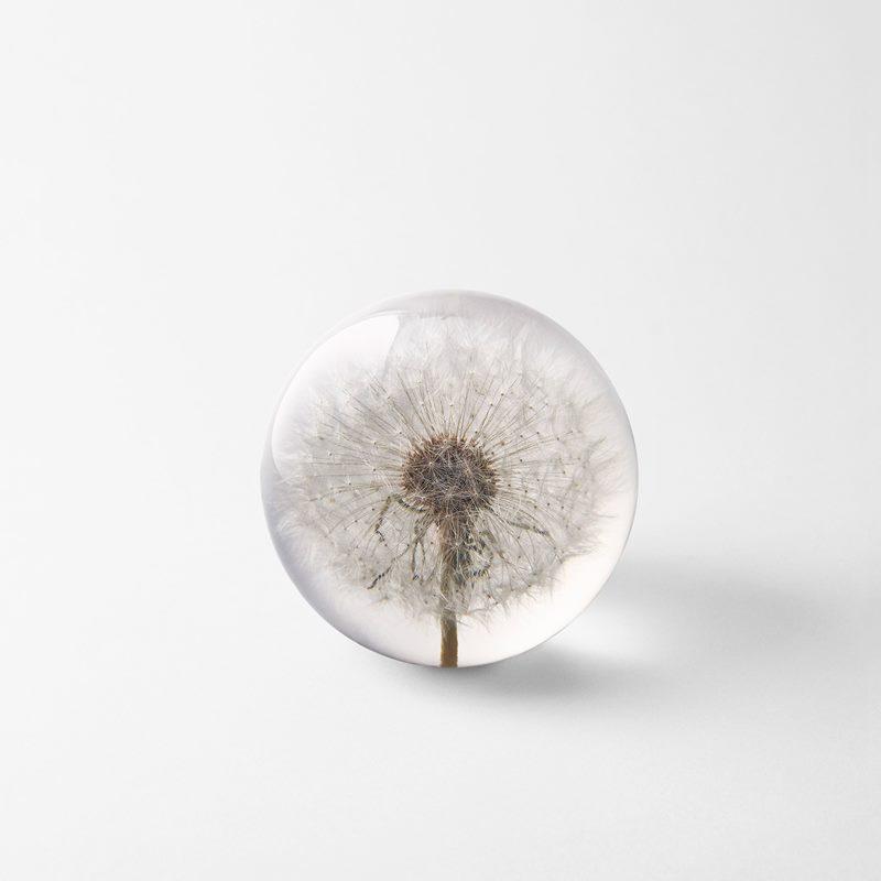 Brevtyngd Flora - 8 cm, Plast, Maskros | Svenskt Tenn