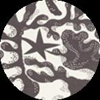 Aristidia Grå