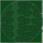 Celotocaulis Grön