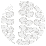 Celotocaulis White
