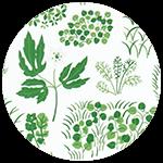 Söndagsmorgon Green